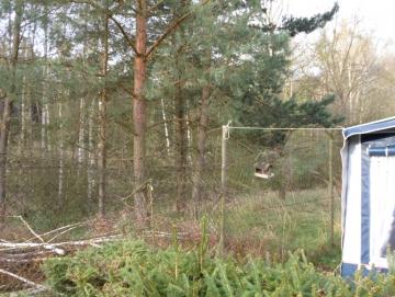 2014 likvidace bříz za plotem Stříbrňáku