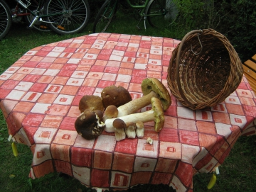 2007 houby podzim