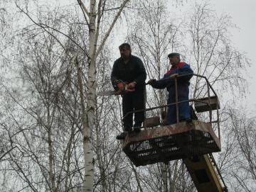 2008 kácení bříz v ATC