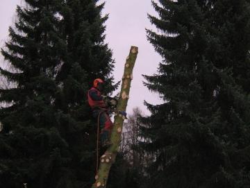 2008 kácení smrku v ATC