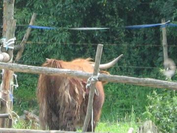 na kolách na ranč 2009