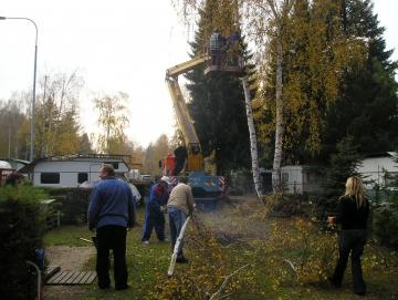 Petr Mazánek Kácení stromů