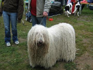 2009 výstava psů Stříbrňák