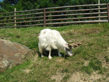 2010 Zoo v Plzni