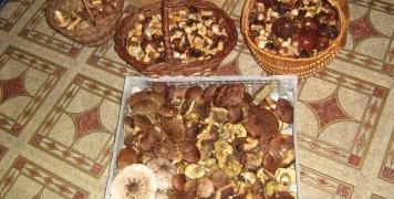 2010 houby na Stříbrňáku